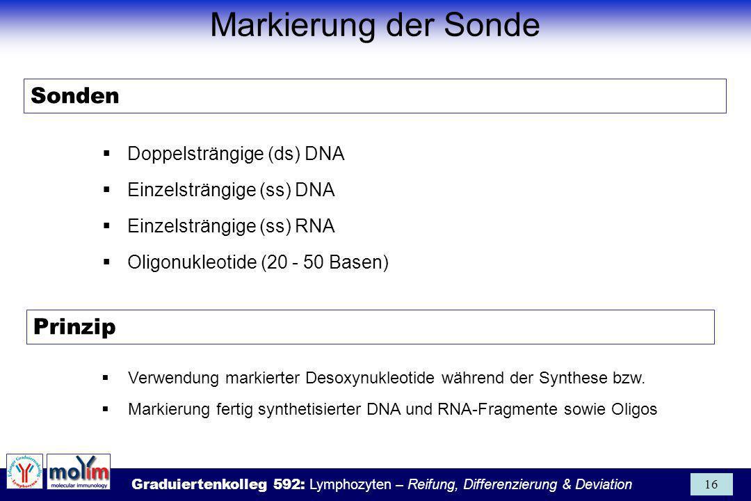 Markierung der Sonde Sonden Prinzip Doppelsträngige (ds) DNA