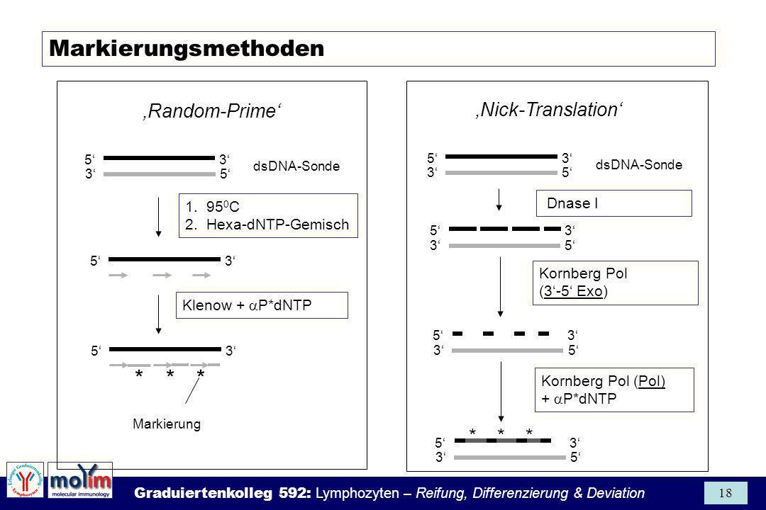 Markierungsmethoden 'Random-Prime' 'Nick-Translation' * * * Dnase I