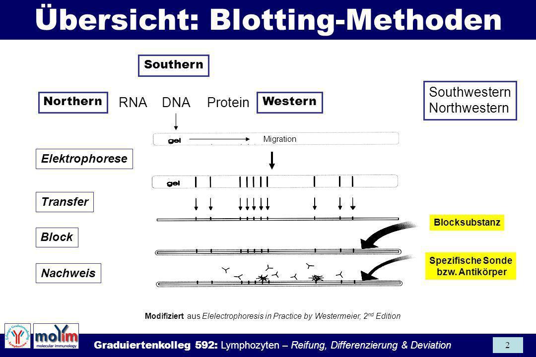Übersicht: Blotting-Methoden