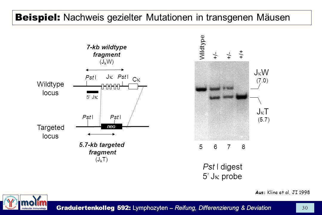 Beispiel: Nachweis gezielter Mutationen in transgenen Mäusen