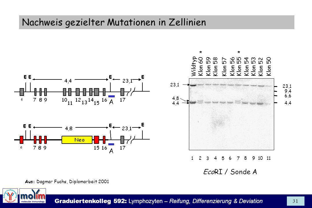 Nachweis gezielter Mutationen in Zellinien