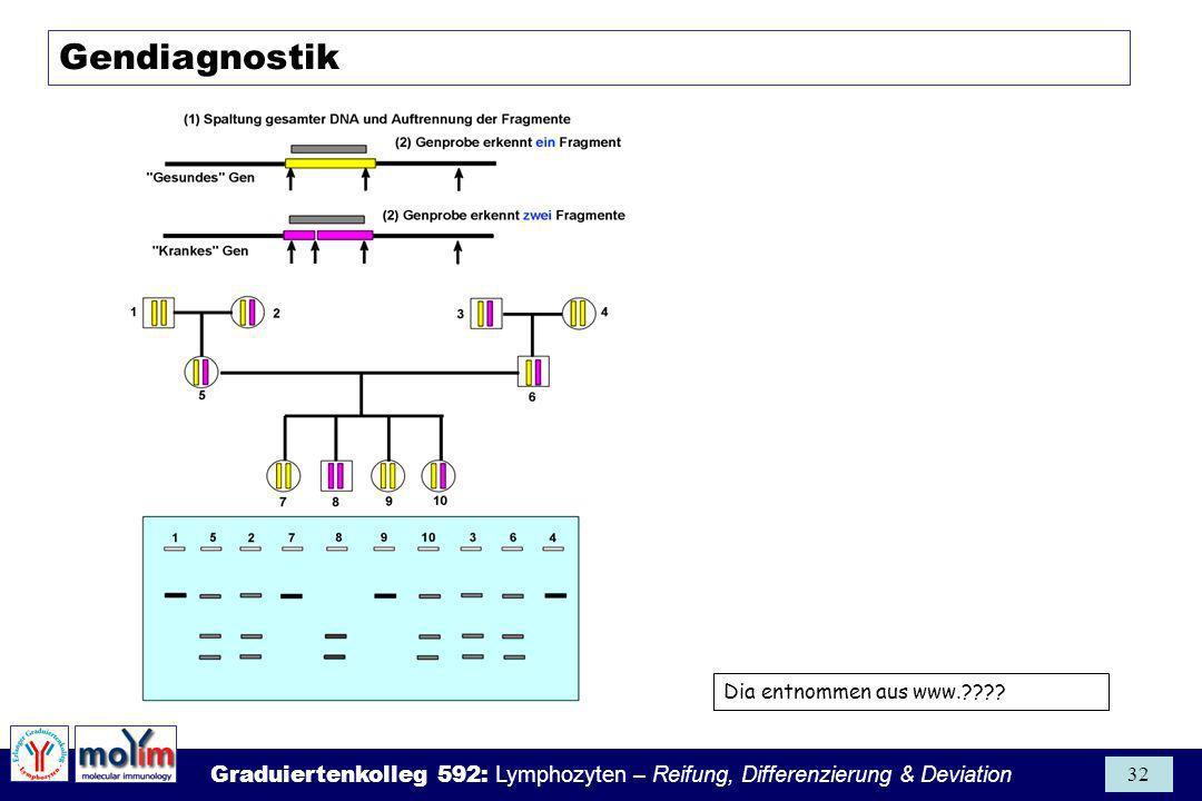 Gendiagnostik Dia entnommen aus www.