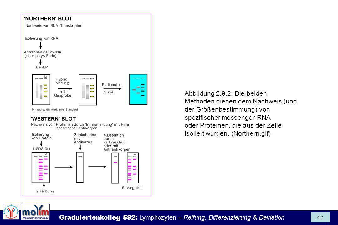 Abbildung 2.9.2: Die beiden Methoden dienen dem Nachweis (und der Größenbestimmung) von spezifischer messenger-RNA