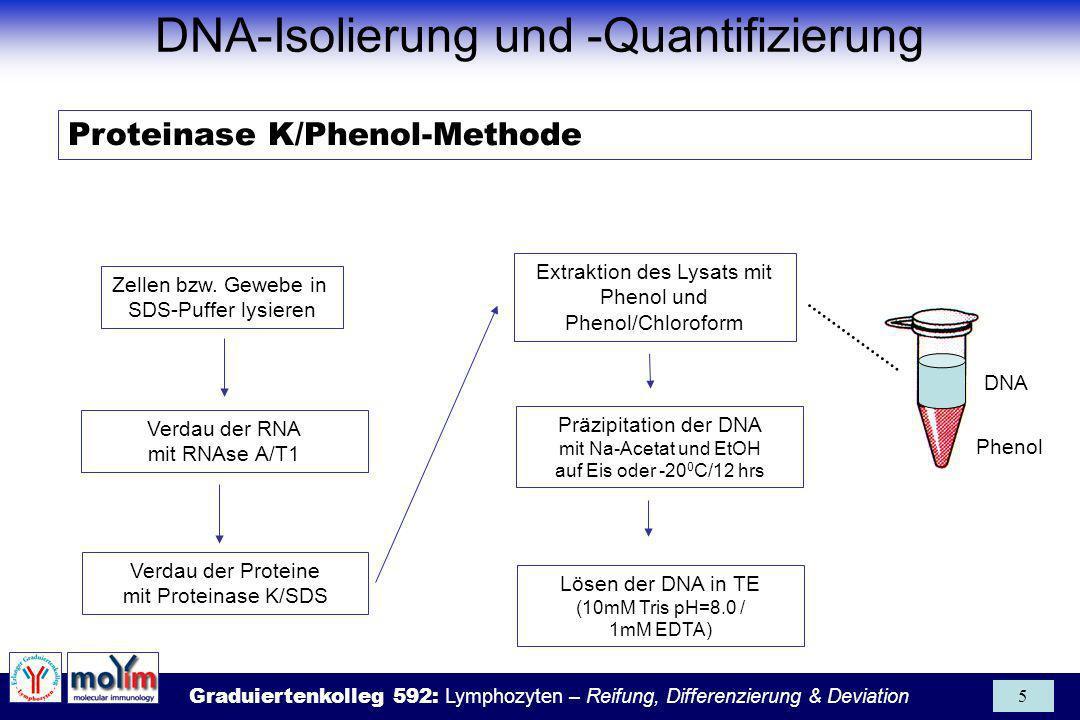 DNA-Isolierung und -Quantifizierung