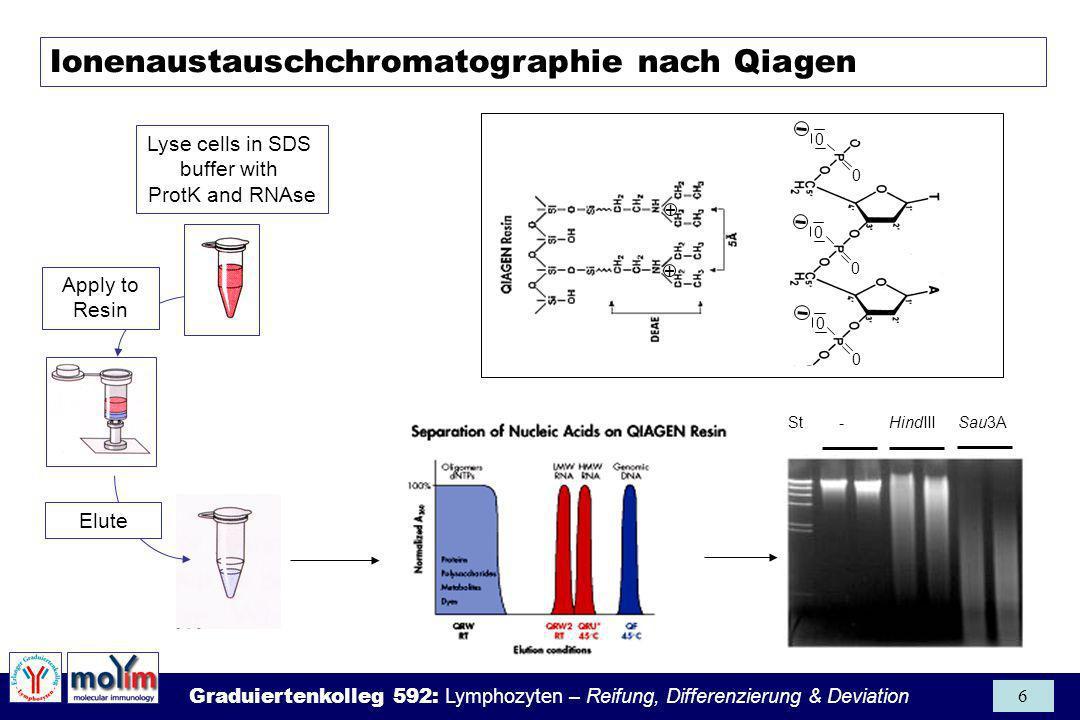 Ionenaustauschchromatographie nach Qiagen