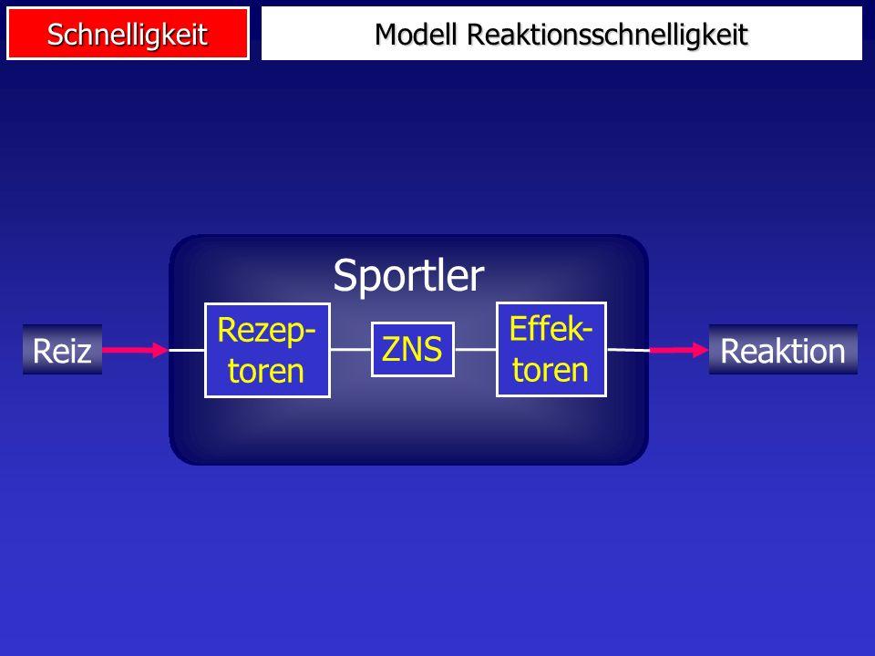 Modell Reaktionsschnelligkeit