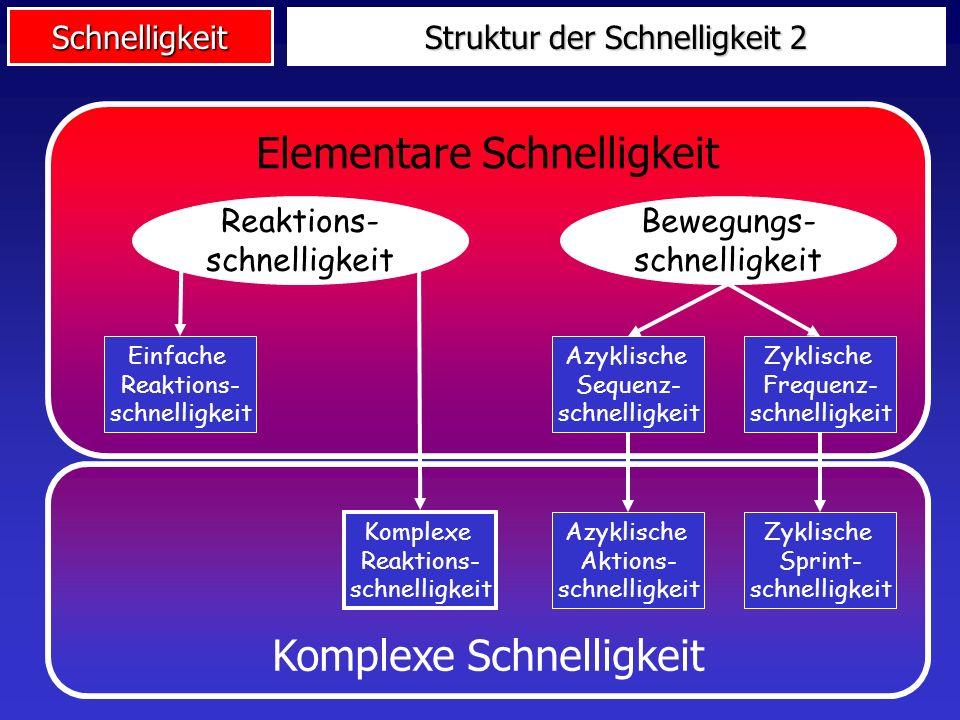 Struktur der Schnelligkeit 2