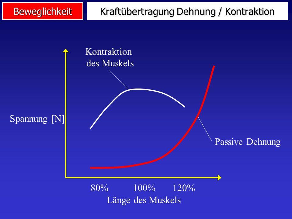 Kraftübertragung Dehnung / Kontraktion