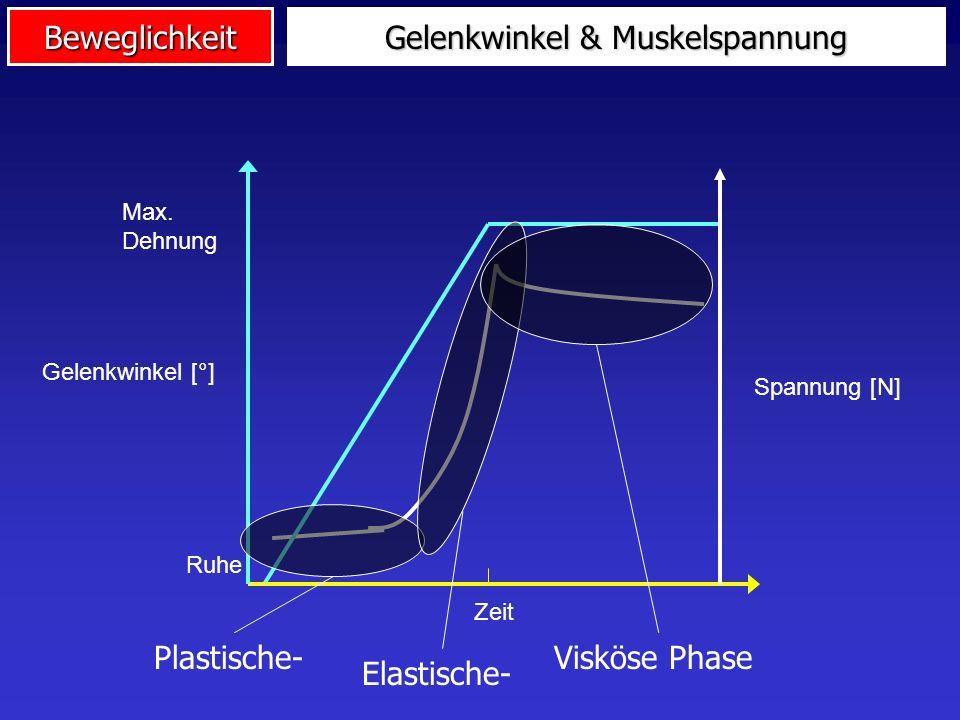 Gelenkwinkel & Muskelspannung