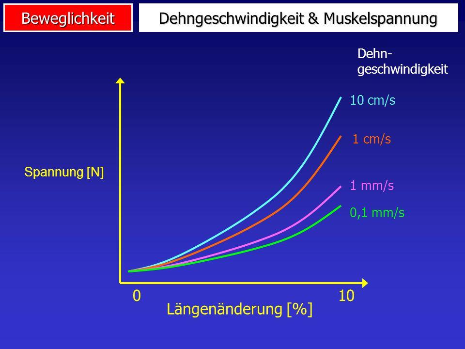 Dehngeschwindigkeit & Muskelspannung