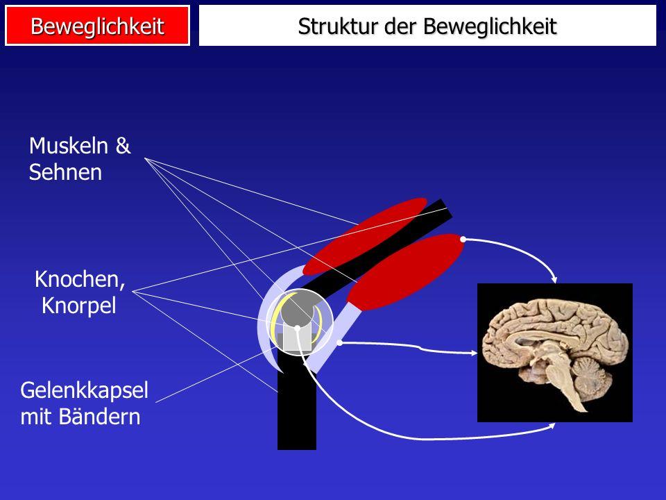 Struktur der Beweglichkeit