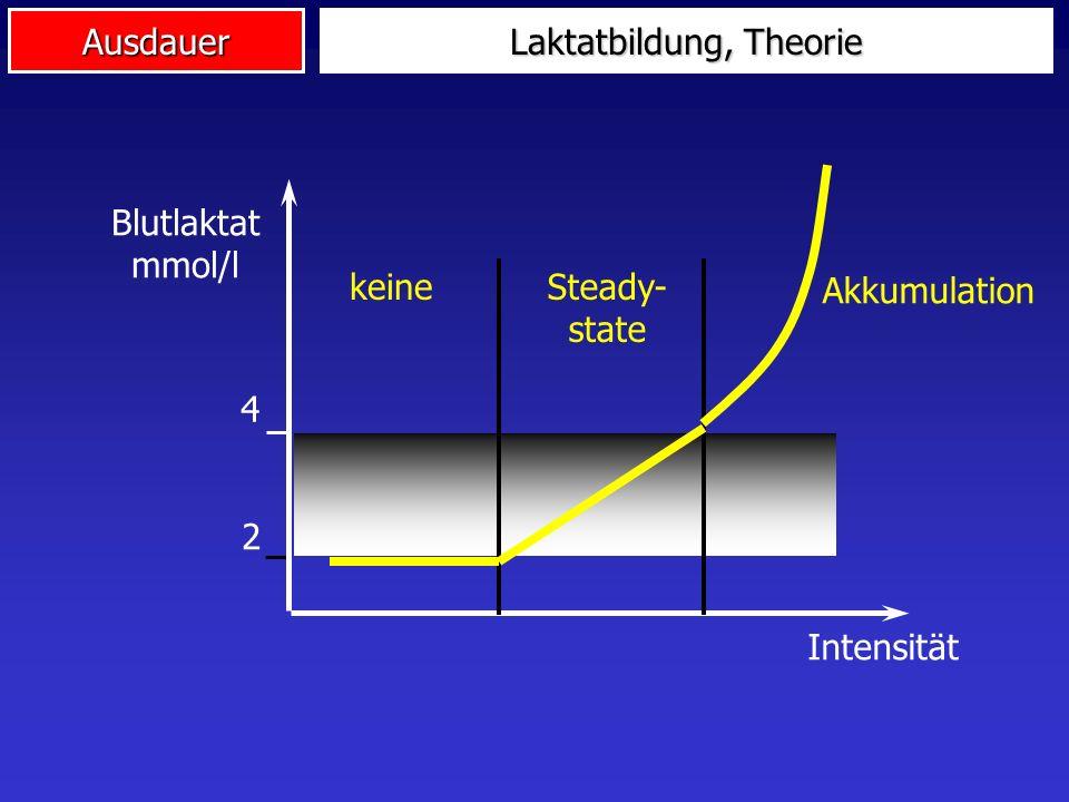 Laktatbildung, Theorie