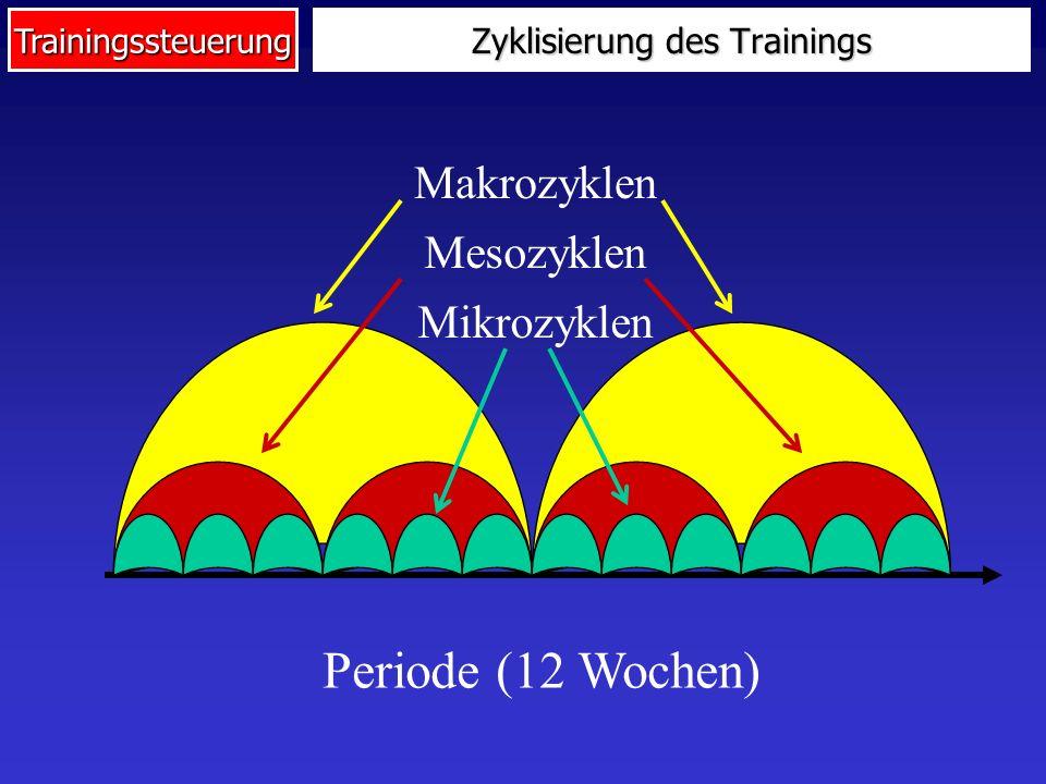 Zyklisierung des Trainings