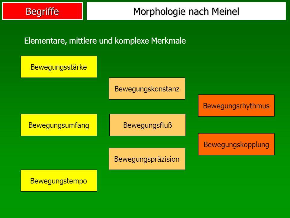 Morphologie nach Meinel