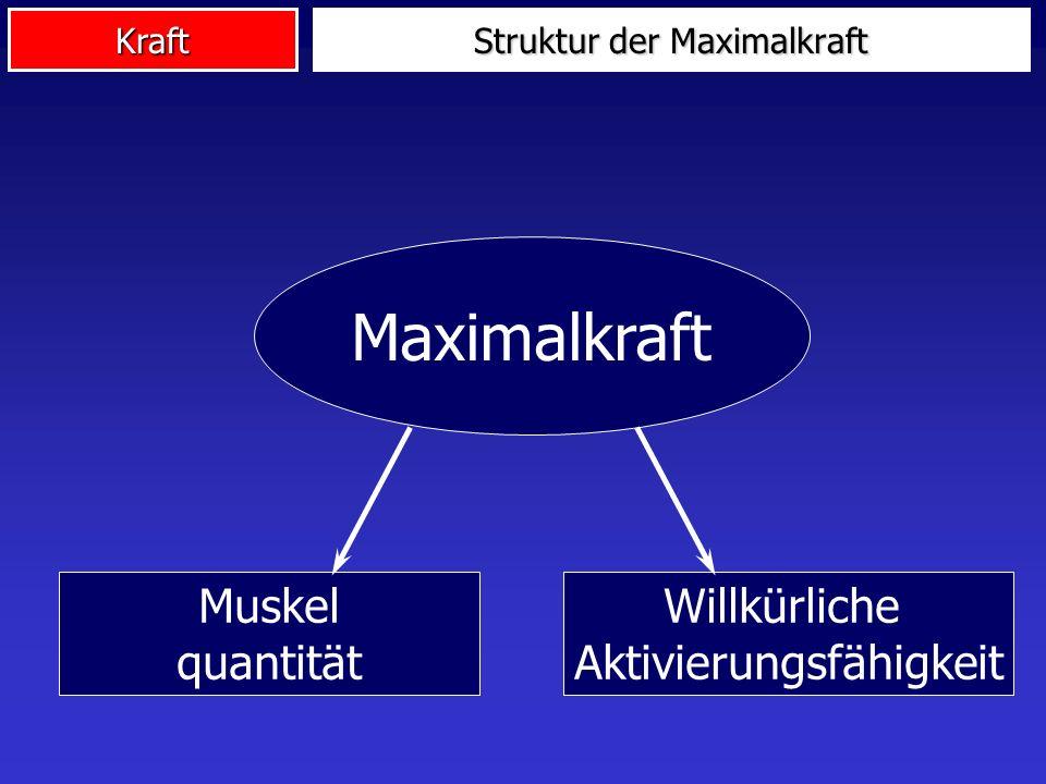 Struktur der Maximalkraft