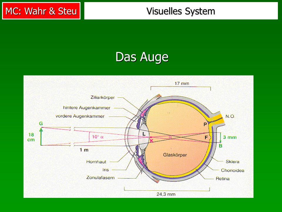 Visuelles System Das Auge