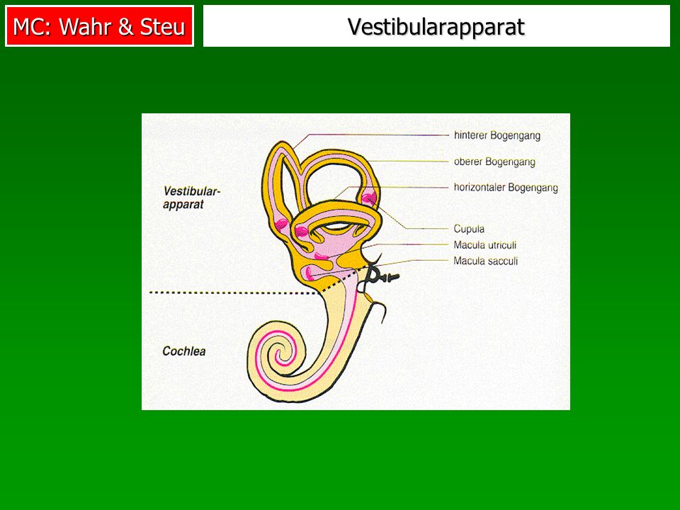 Vestibularapparat