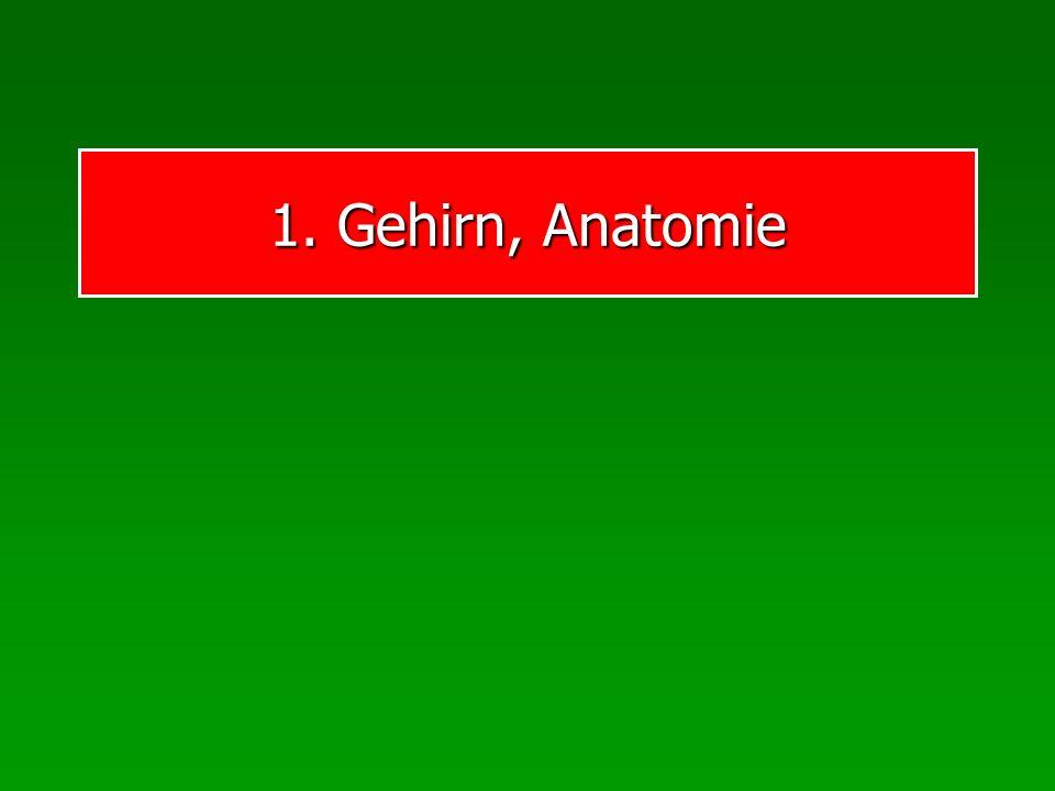 1. Gehirn, Anatomie