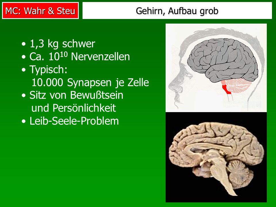 Typisch: 10.000 Synapsen je Zelle