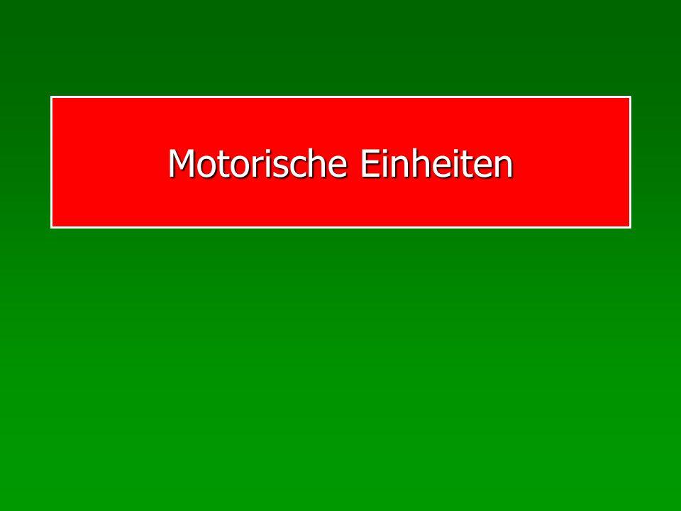 Motorische Einheiten