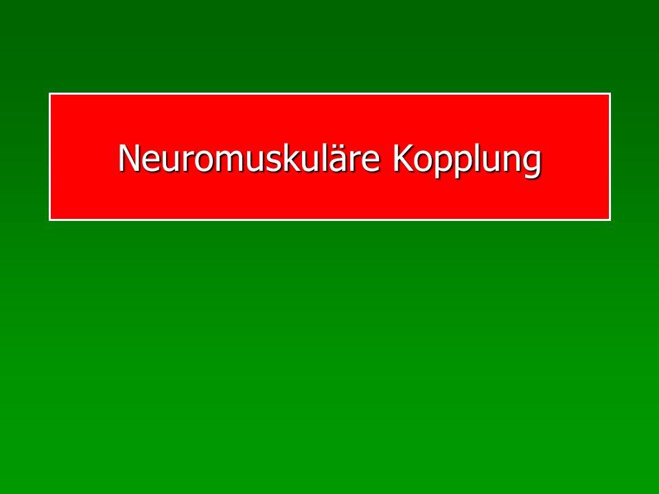 Neuromuskuläre Kopplung
