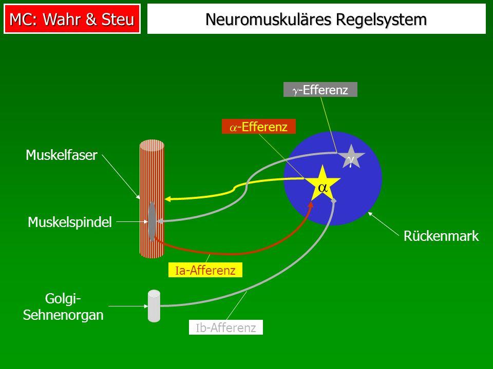 Neuromuskuläres Regelsystem