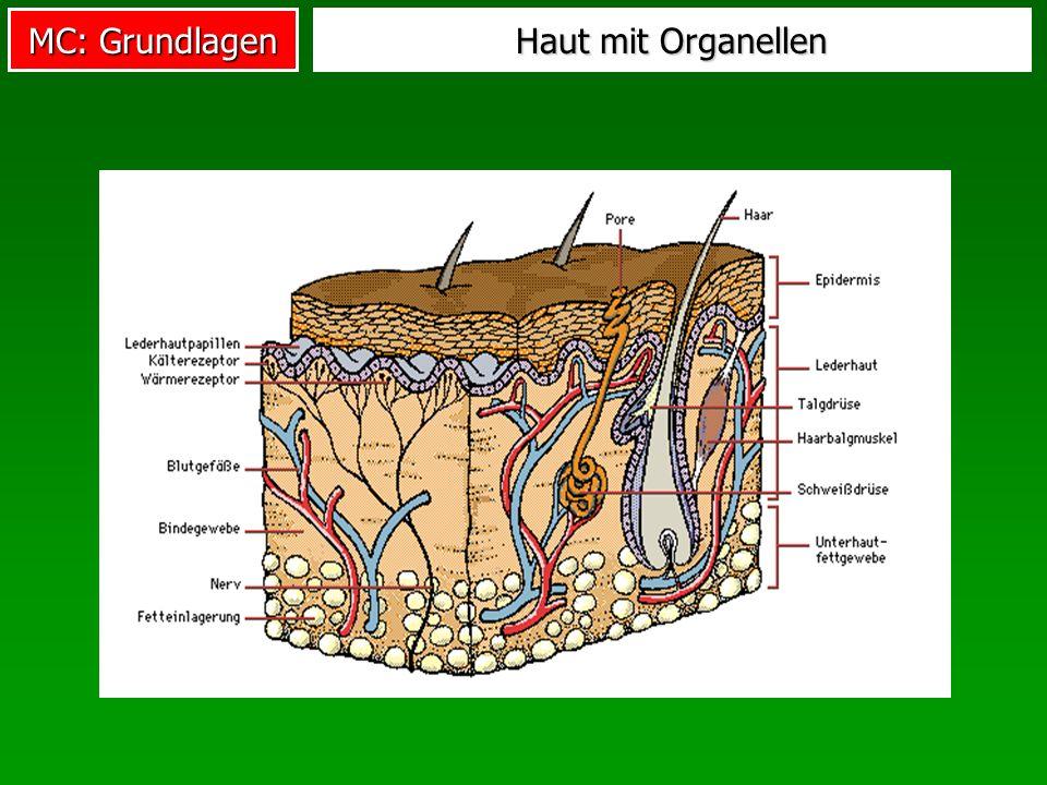 Haut mit Organellen