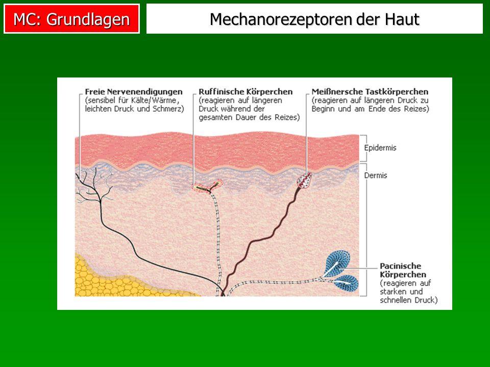 Mechanorezeptoren der Haut