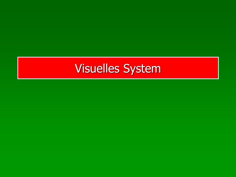 Visuelles System