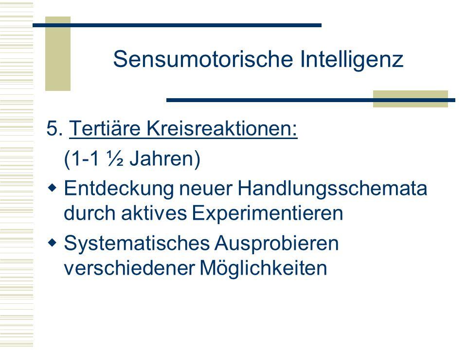 Sensumotorische Intelligenz