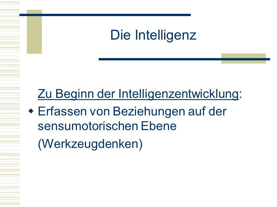 Die Intelligenz Zu Beginn der Intelligenzentwicklung: