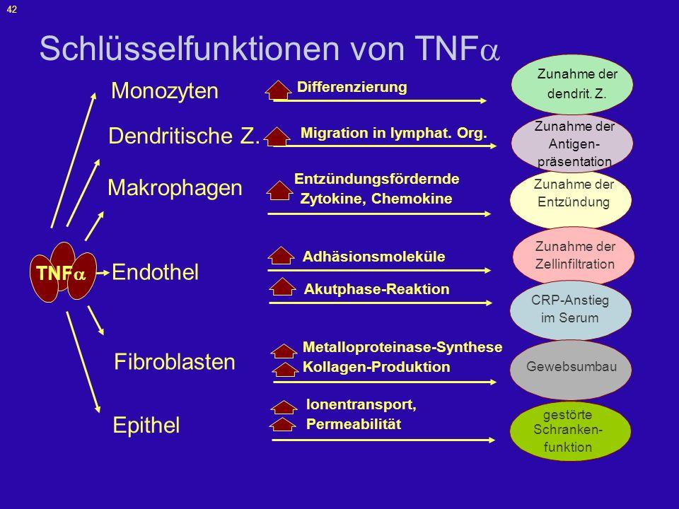 Schlüsselfunktionen von TNF