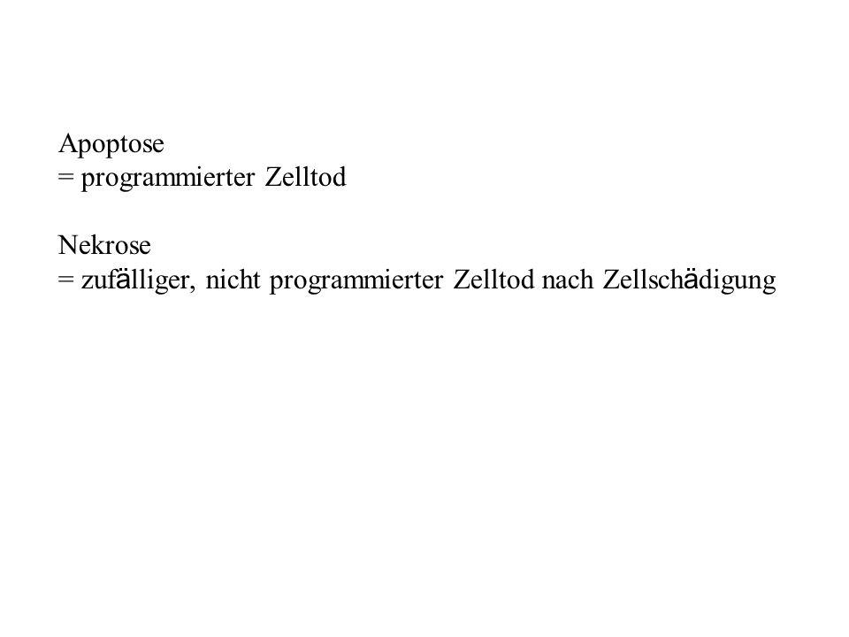 Apoptose = programmierter Zelltod. Nekrose.