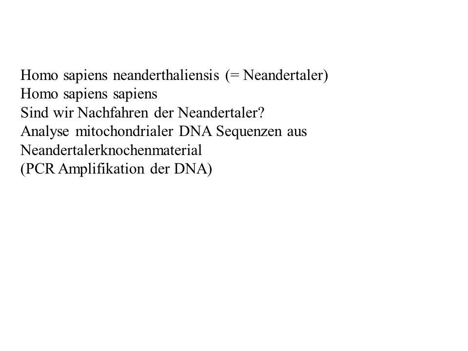 Homo sapiens neanderthaliensis (= Neandertaler)