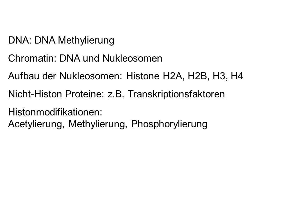 DNA: DNA Methylierung Chromatin: DNA und Nukleosomen. Aufbau der Nukleosomen: Histone H2A, H2B, H3, H4.