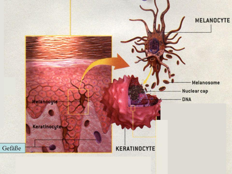 Haut Niere Gefäße