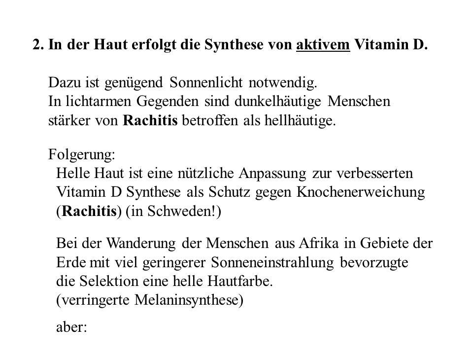 2. In der Haut erfolgt die Synthese von aktivem Vitamin D.