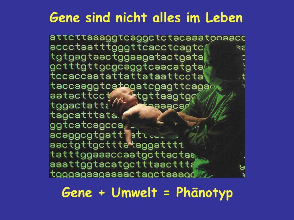 Gene sind nicht alles im Leben