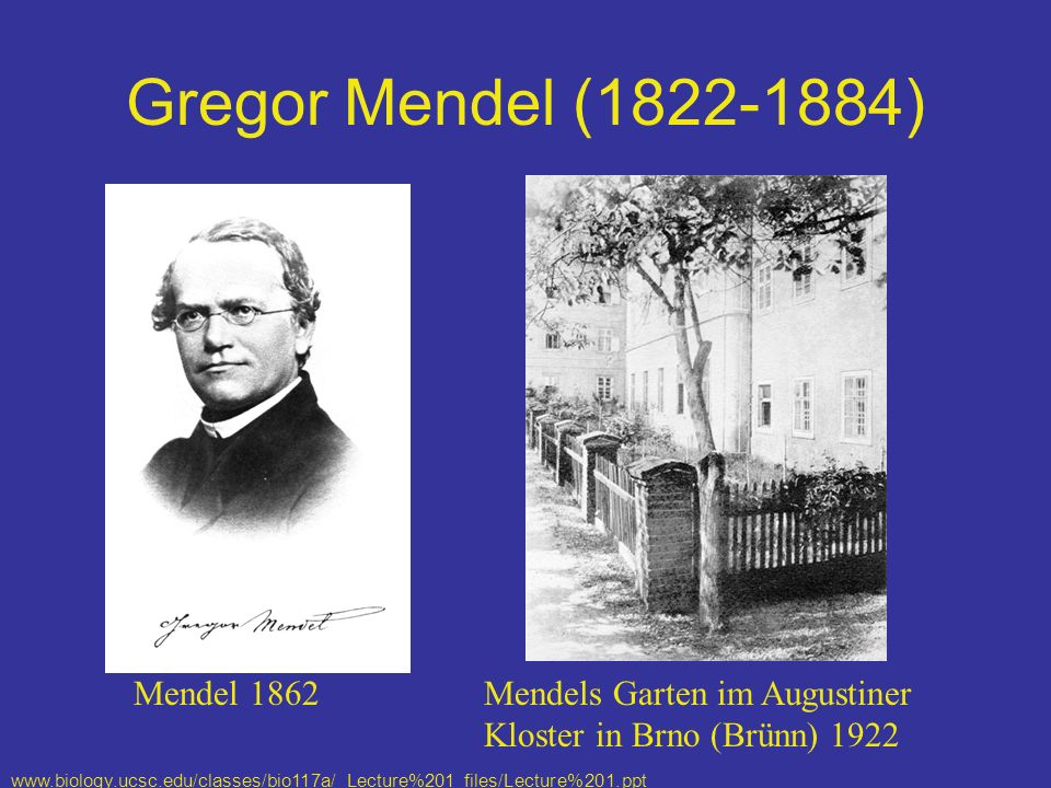 Gregor Mendel (1822-1884) Mendel 1862 Mendels Garten im Augustiner