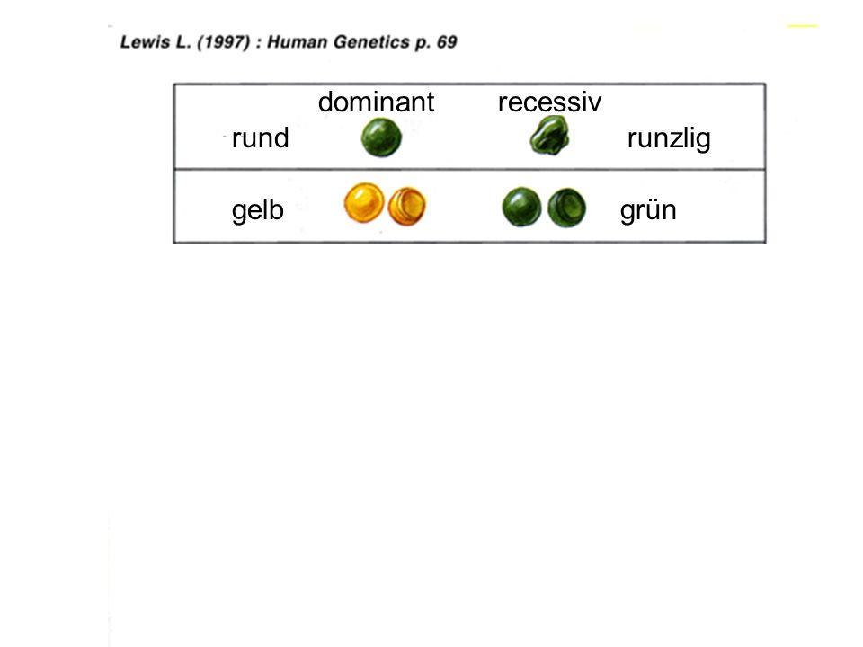 434 dominant recessiv rund runzlig gelb grün