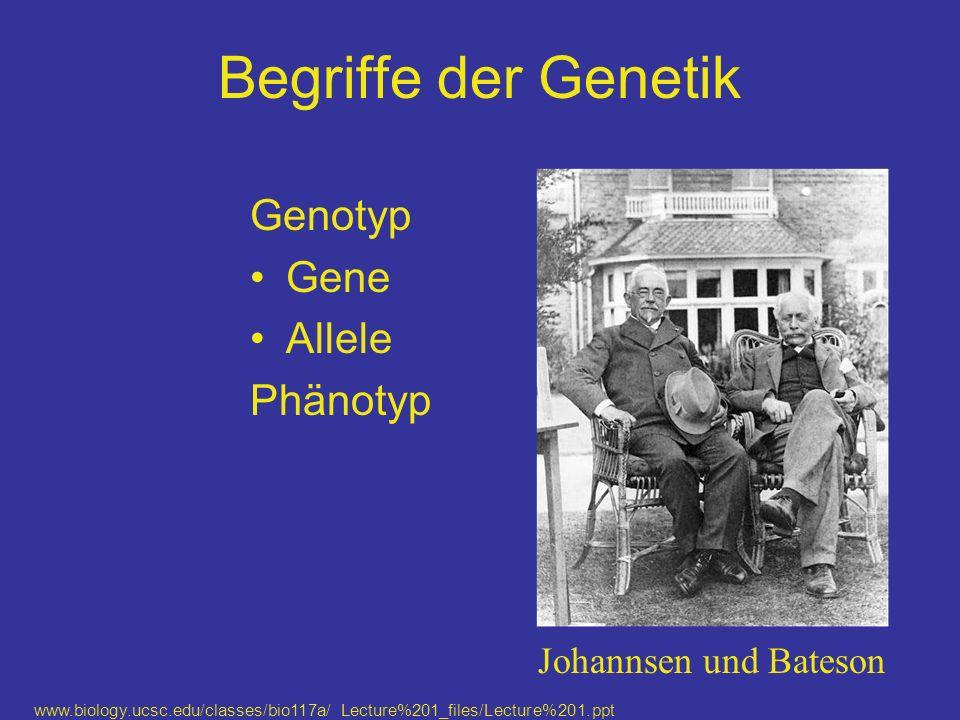 Begriffe der Genetik Genotyp Gene Allele Phänotyp