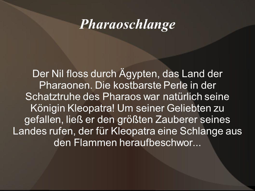 Pharaoschlange
