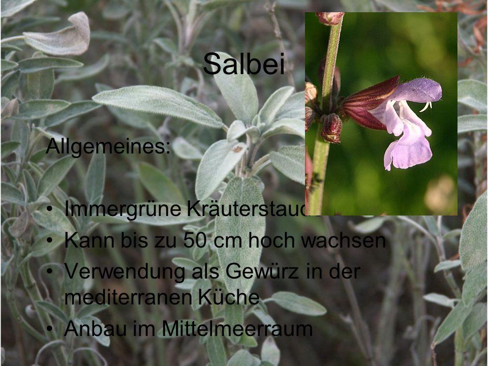 Salbei Allgemeines: Immergrüne Kräuterstaude