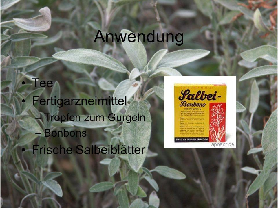 Anwendung Tee Fertigarzneimittel Frische Salbeiblätter