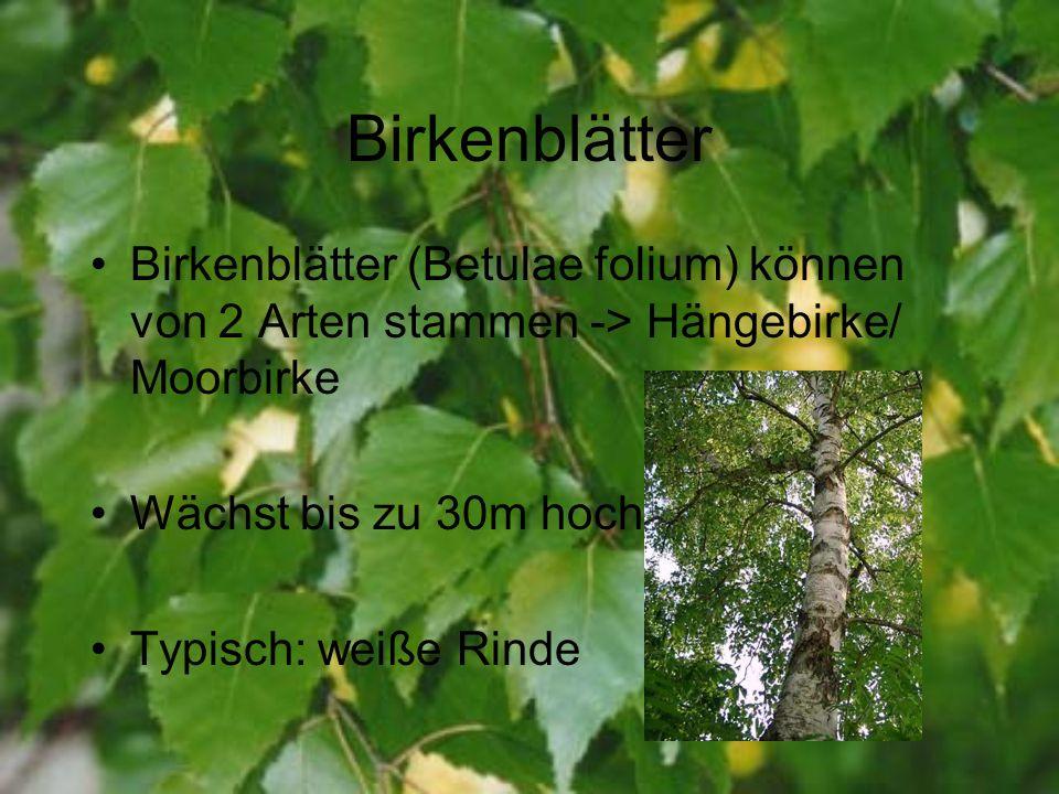 Birkenblätter Birkenblätter (Betulae folium) können von 2 Arten stammen -> Hängebirke/ Moorbirke. Wächst bis zu 30m hoch.
