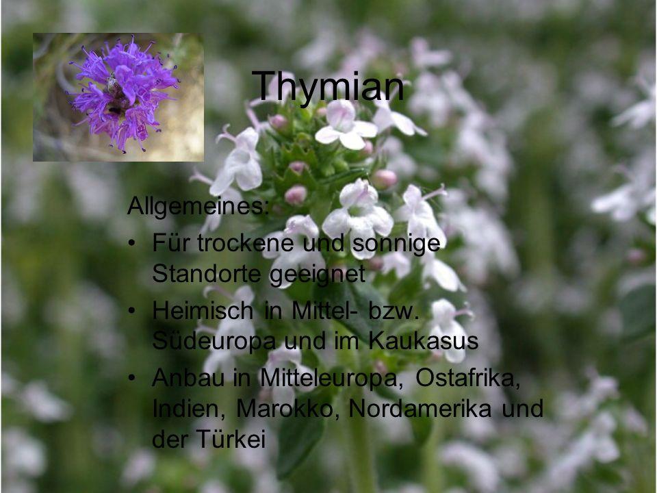 Thymian Allgemeines: Für trockene und sonnige Standorte geeignet
