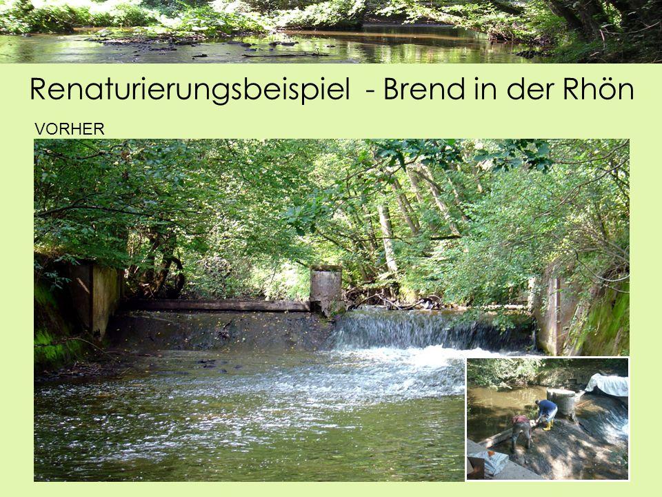 Renaturierungsbeispiel - Brend in der Rhön