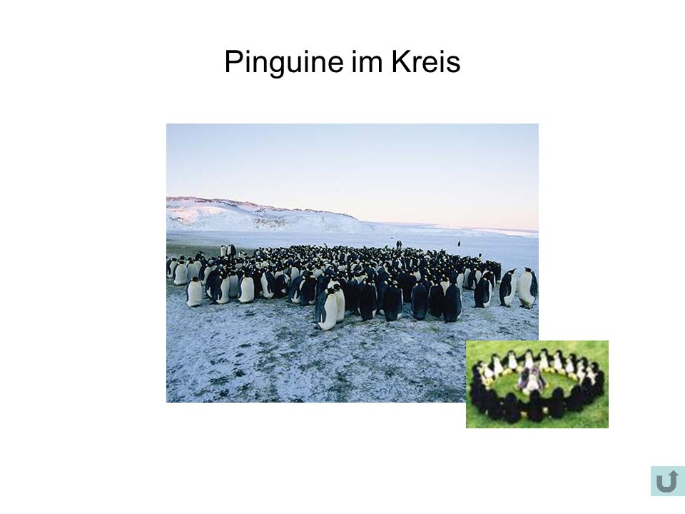 Pinguine im Kreis