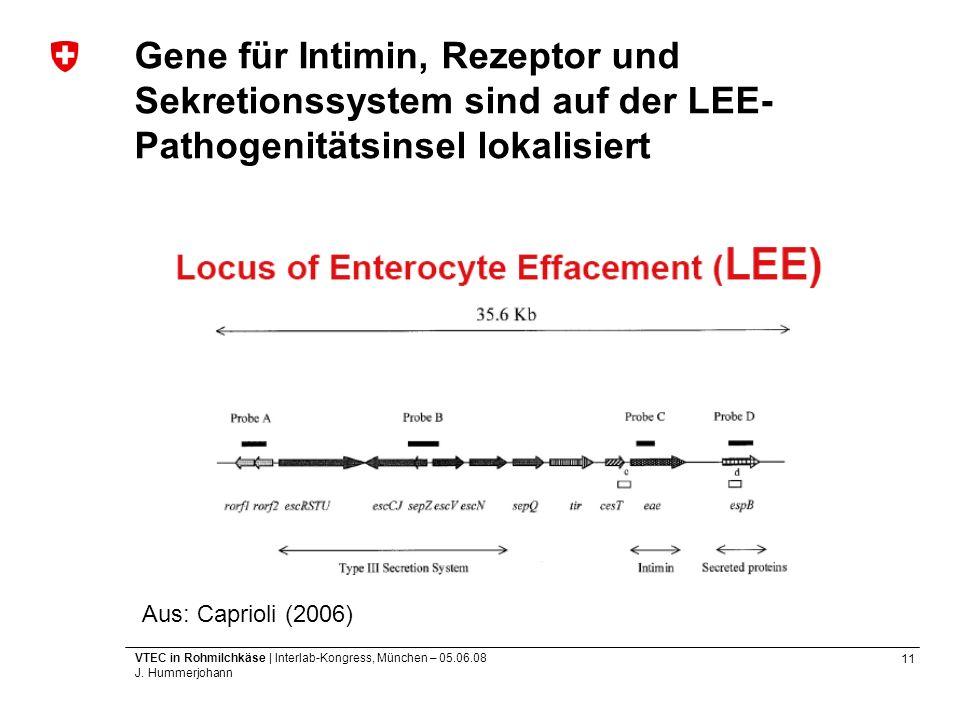 Gene für Intimin, Rezeptor und Sekretionssystem sind auf der LEE-Pathogenitätsinsel lokalisiert