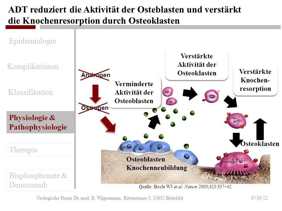 ADT reduziert die Aktivität der Osteblasten und verstärkt die Knochenresorption durch Osteoklasten